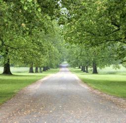 Green-Trees.jpg